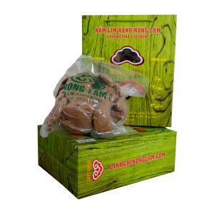 nấm Lim xanh nông lâm cao câp