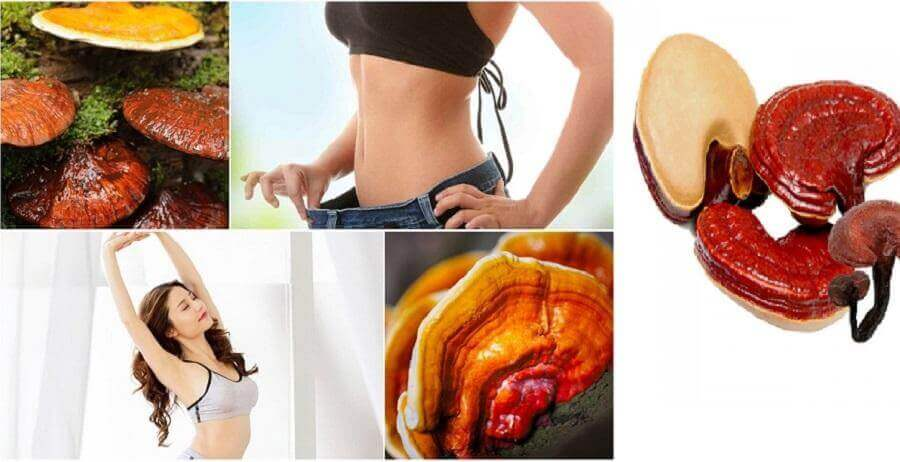 Ganoderma Why Is Detoxification And Slimming