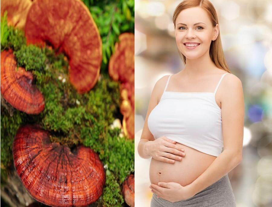 Ganoderma Effect For Pregnant Women How