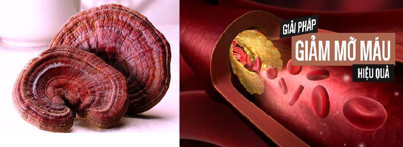 Lý do người bị mở máu nên sử dụng nấm linh chi? 2