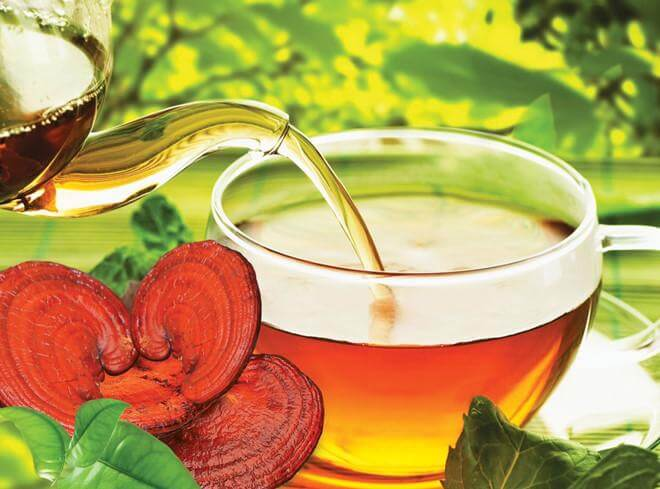 Ganoderma Use What Should Pay attention