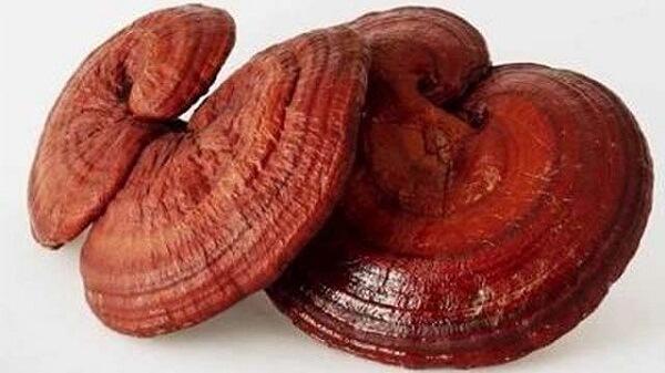 """Nấm linh chi đỏ được biết đến như một """"thần dược"""""""