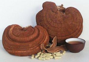 Thị trường xuất hiện nhiều loại nấm linh chi đỏ kém chất lượng bày bán tràn lan
