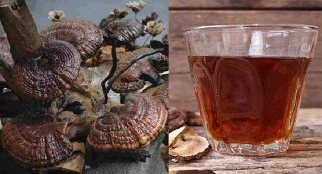 Mushroom water should drink up during the day