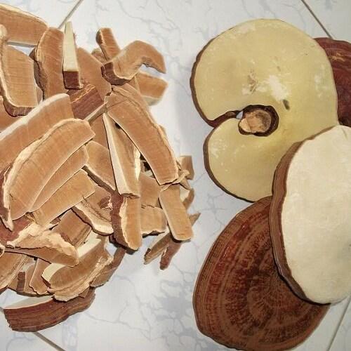 Ganoderma provides quality reishi mushroom
