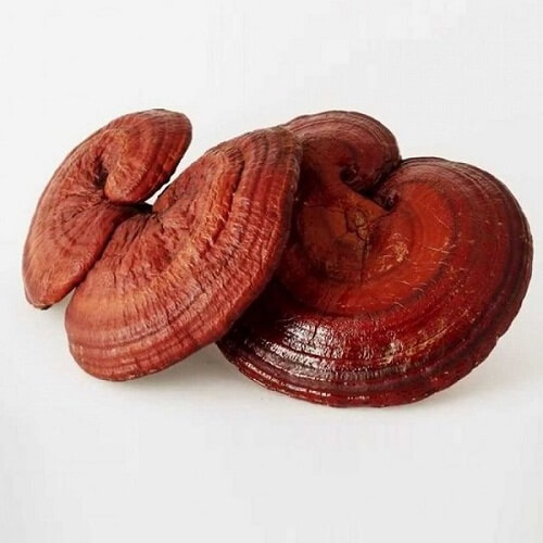 Red reishi mushrooms are easy to find