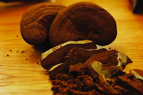 Sliced red Ganoderma cooked drinking water retains many nutrients