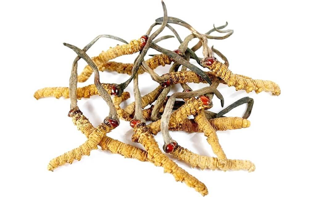 Đông trùng hạ thảo (ĐTHT) từ lâu được sử dụng như thảo dược trong y học cổ truyền Trung Hoa và y học cổ truyền Tây Tạng