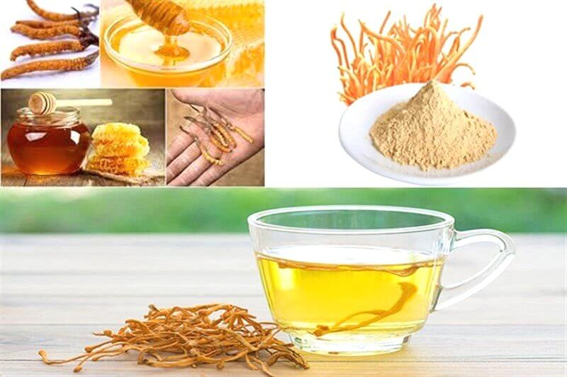 Cordyceps (DTHT) has long been used as an herb in traditional Chinese medicine and traditional Tibetan medicine