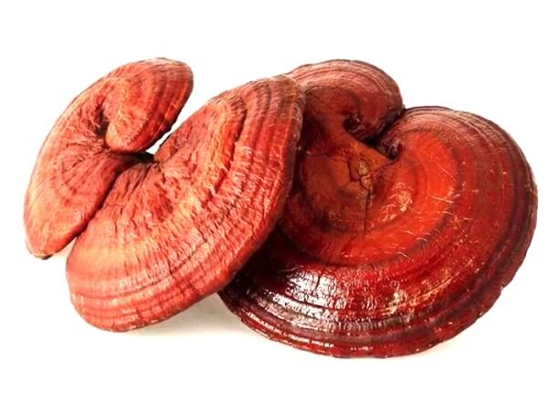 Ganoderma red supports the treatment of poisoning effectively