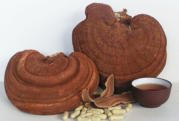 Ganoderma has many effects on lung disease