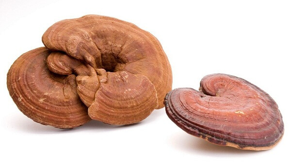 Ganoderma helps the body recover quickly