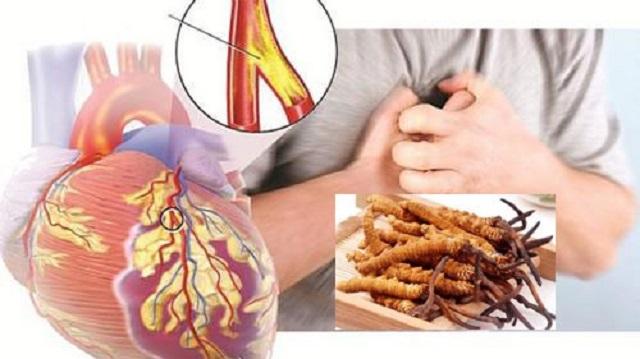 Sử dụng đông trùng hạ thảo Đức đem lại nhiều lợi ích cho tim mạch