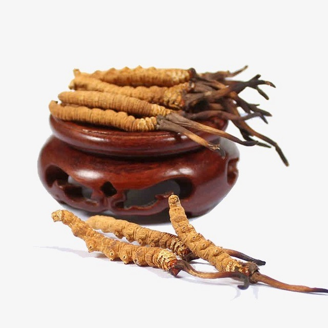 Chinese cordyceps have many health benefits
