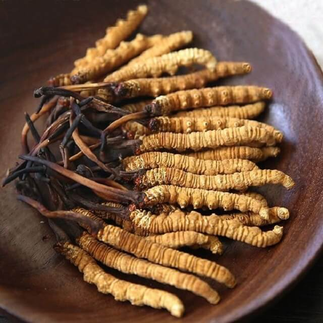 There are many reasons why natural cordyceps are expensive
