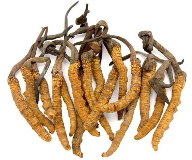 Sử dụng đông trùng hạ thảo sẽ giúp bảo vệ tế bào gan, thận, phổi