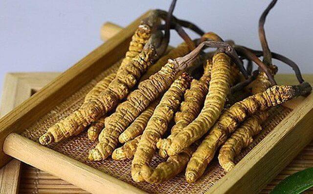 Đông trùng hạ thảo nguyên con chứa nhiều dưỡng chất