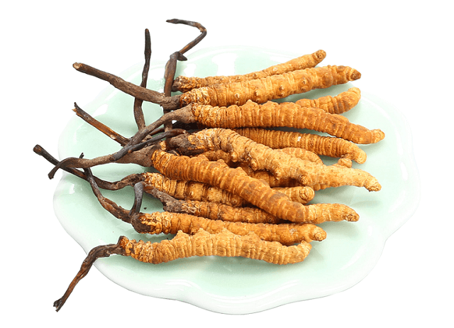 Cordyceps in Linh Chi Nong Lam