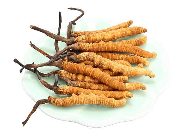 Đông trùng hạ thảo tại Linh Chi Nông Lâm