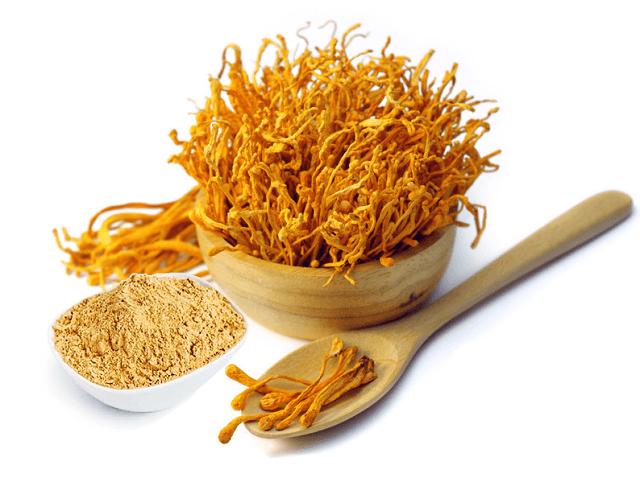 Trùng thảo Việt Nam có chất lượng tốt ngang với trùng thảo tự nhiên Tây Tạng