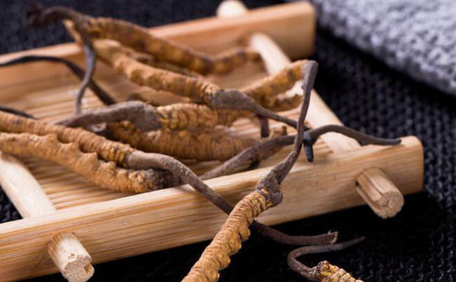 Cordyceps brand of heart sugar contains many important pharmaceuticals