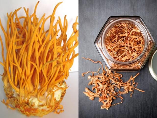 There are many criteria to evaluate the quality of cordyceps