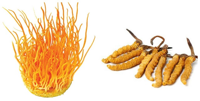 Children from 13 years old and above can use cordyceps