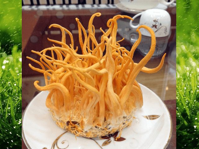 Fresh Cordyceps Bao Khang meets quality standards
