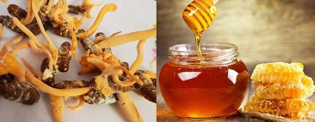 Using cordyceps soaked in honey is very good for health