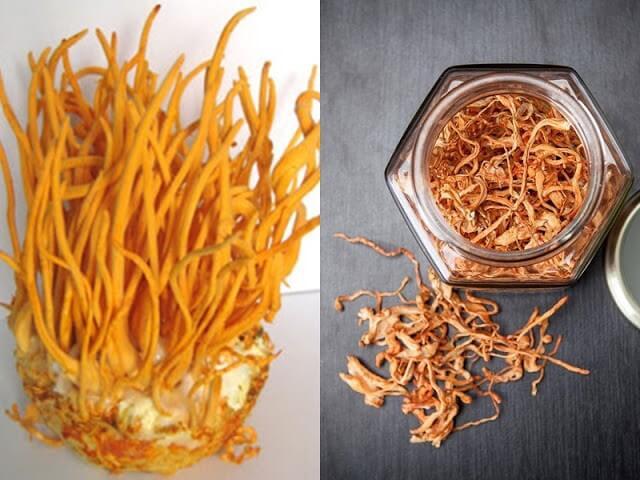 Đông trùng hạ thảo Khang Thịnh được nhiều người quan tâm sử dụng