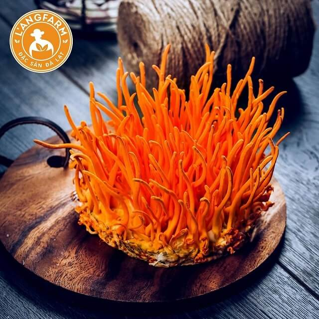 Cordyceps L'angfarm has been shown to provide many great uses for health