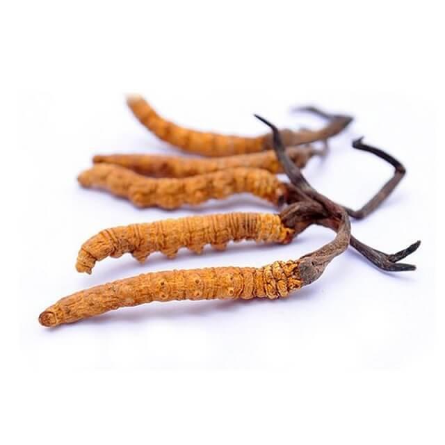 Đối với những bệnh nhân có sức khỏe yếu, sử dụng đông trùng hạ thảo để có thể nâng cao sức khỏe.
