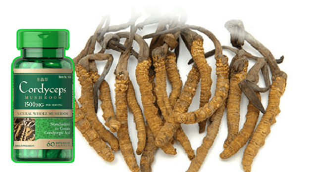 What do you know about Puritan's cordyceps?