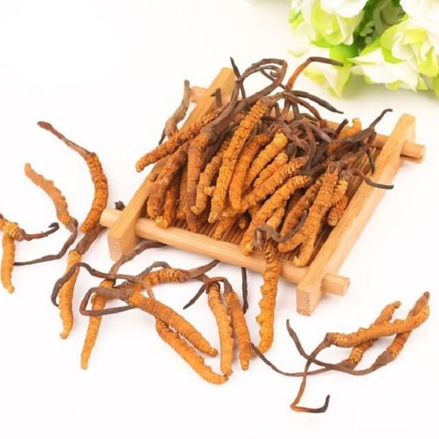 Genuine Tibetan Cordyceps provided by Quy Hoang Company of perfect quality