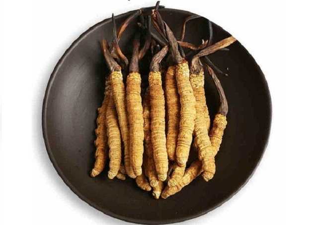 Price of cordyceps Quy Hoang brand is not too expensive