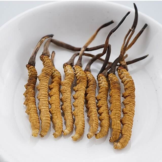 Quy Hoang provides genuine Tibetan cordyceps