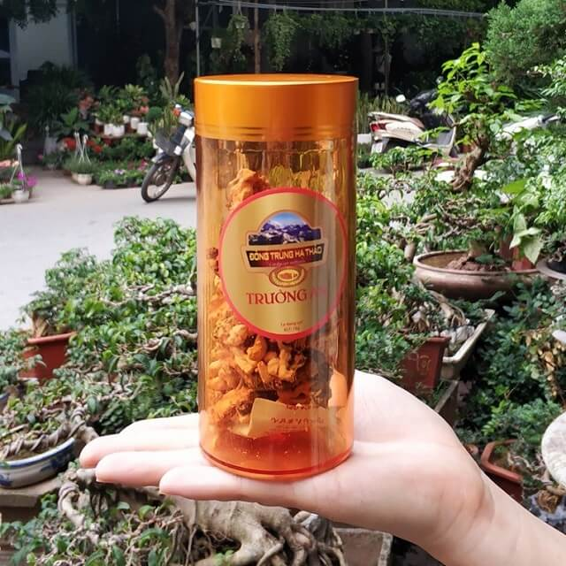 Cordyceps cordyceps with high nutrient content