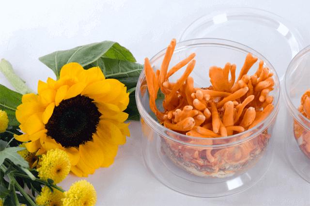 Fresh cordyceps have a maximum shelf life of 10 days when refrigerated