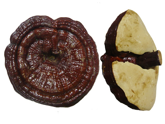 Ganoderma has a characteristic bitter taste that is difficult to drink