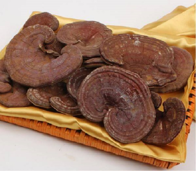 Ganoderma has a slightly bitter taste, so it will be difficult to drink with first-time users