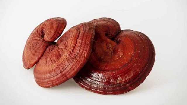 Ganoderma Omexxel is benign and safe for users