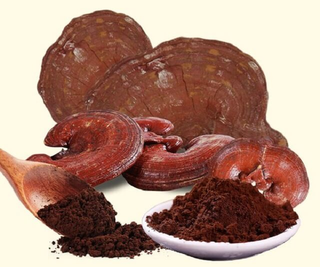 Ganoderma needs to use the right dose to ensure health