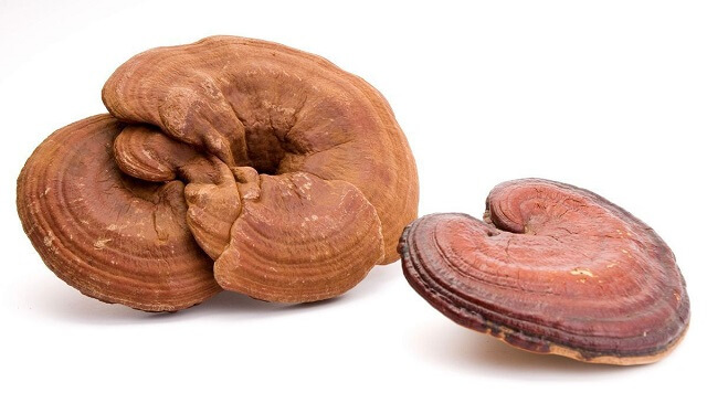 The mechanism of action of Ganoderma Samjin