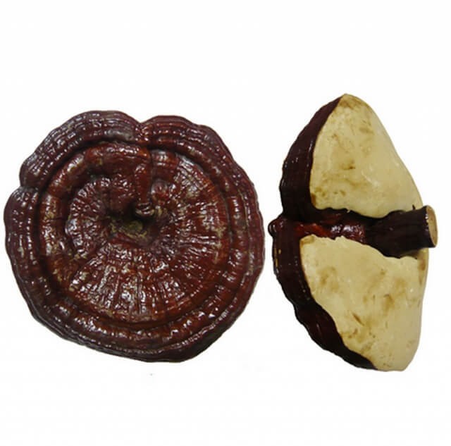Uhak Ganoderma is grown on woody stems so excellent quality