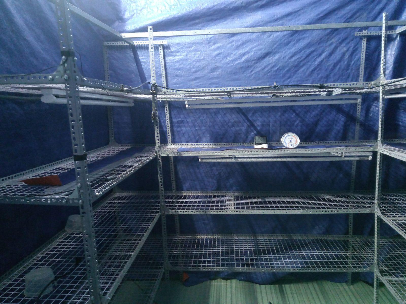 sản xuấtđông trùng hạ thảo