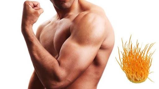 đông trùng hạ thảo với nam giới- cải thiện sức mạnh cơ bắp