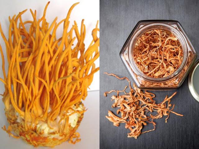 """Đông trùng hạ thảo là loại nấm """"cao cấp"""" để trị bách bệnh"""