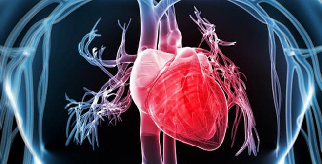 Đông trùng hạ thảo bảo vệ tim mạch