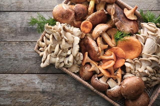 Các loại nấm có tác dụng tăng cường kháng thể