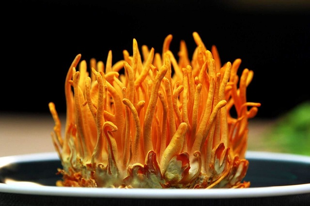 Cordyceps is a parasitic fungus on larvae and young worms
